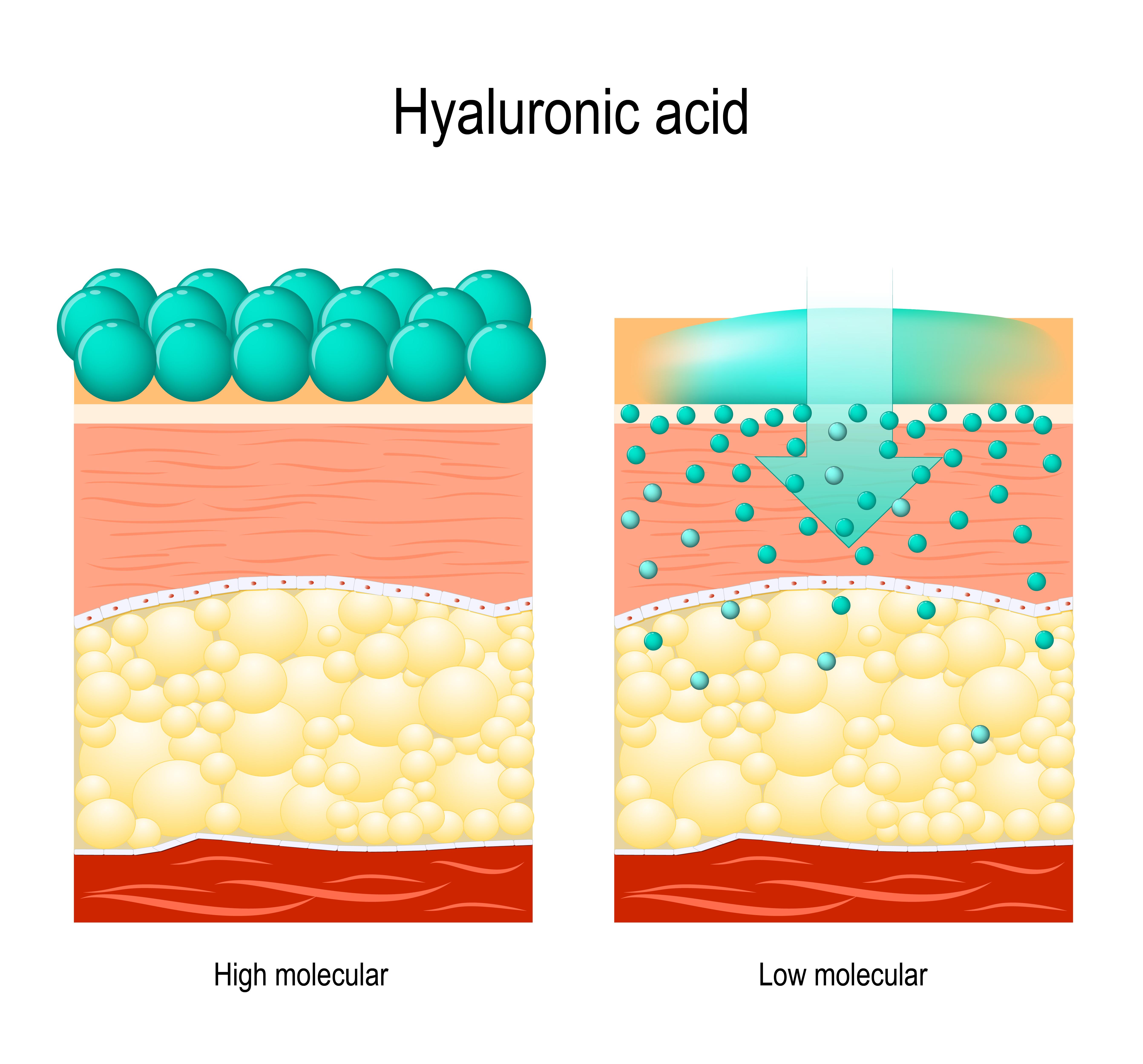 Wirkung Hyaluron